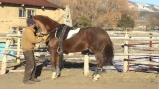 Piaffe Intro  (Dressage Training for Horse and Rider)