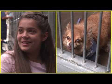 Xxx Mp4 This Girl Fell For A Forgotten Shelter Dog – And Did Everything In Her Power To Save Him In Time 3gp Sex