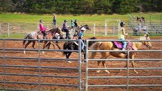 Fall Horse Fun Show