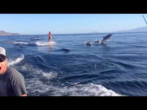 Dolphin Surfing Woman Wakeboarding with Dolphins as seen on TV WORLDWIDE