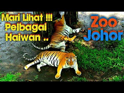 Xxx Mp4 JOM Lihat Haiwan Di Zoo Johor Part II 3gp Sex