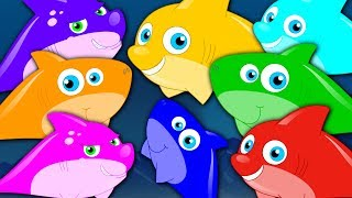Learn Colors | Shark Song | Colors Song | Kids TV