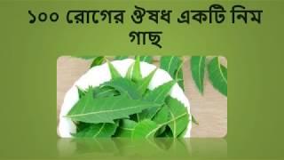 ১০০ রোগের ঔষধ একটি নিম গাছ জেনে নিন কি কি রোগ ? Bangla Health Tips