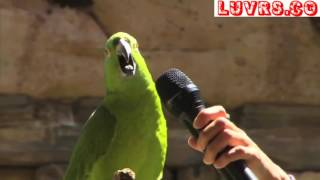 Most Amazing Parrot Singing Video, Funny Parrot talking Show