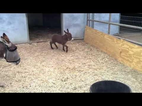 Xxx Mp4 Adorable Baby Donkey 3gp Sex