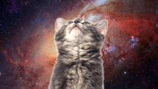 Space Cats (Моя Версия)