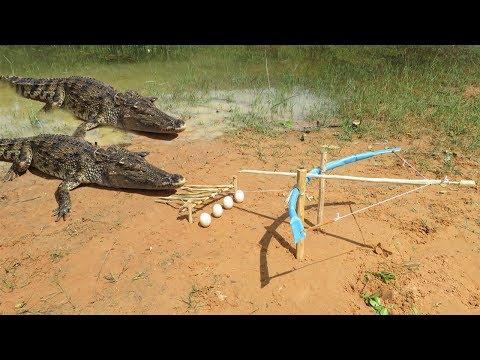 Primitive Technology: Man Make Crocodile Trap - How To Make Big Crocodile Trap Work