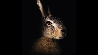 The Mysterious Hare