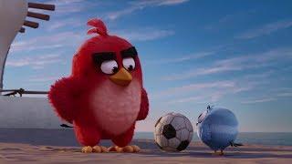 Angry Bird | Funny Whatsapp Status | Angry Bird Whatsapp Status