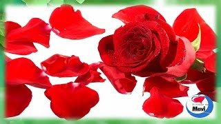 7 Beneficios de los petalos de rosas para la salud que te sorprenderan