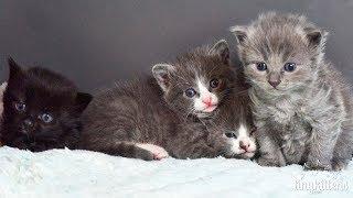 The Muppet Kittens - TinyKittens.com
