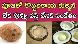 పూజలో కొబ్బరికాయ కుళ్ళిన లేక పువ్వు వస్తే దేనికి సంకేతం   Vasthu Tips About Coconut   Money Money