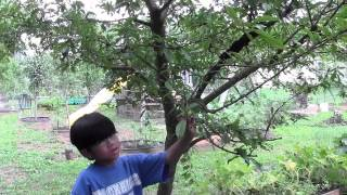 When You Are Farmer You May Have To Share Your Harvest With Animals - Gardening Ideas With Aiman