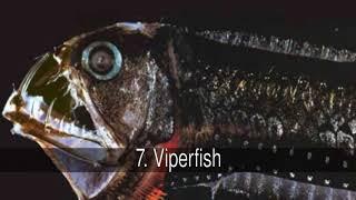 Los peces más temibles y peligrosos