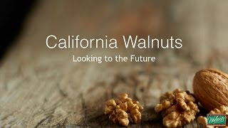 Seeking out Greater Demand for a Record High Walnut Supply