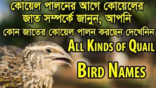 কোয়েলের জাত সম্পর্কে জানুন,All Kinds of Quail Bird Names,Agriculture World,Best Quail Farm