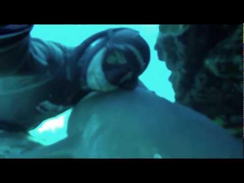 Ataque a Tubarão