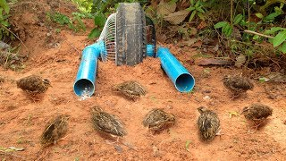 Awesome Quick Bird Trap Using Electric Fan Guard And Car Tire - Easy Best Bird Trap With Water Pipe