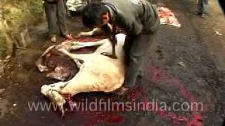 Animal slaughter in north-east India