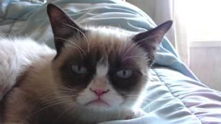 Sleepy Grumpy Cat!