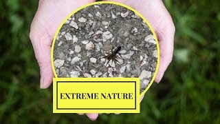 Extreme nature Bug eating spider