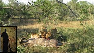Fresh kudu kill