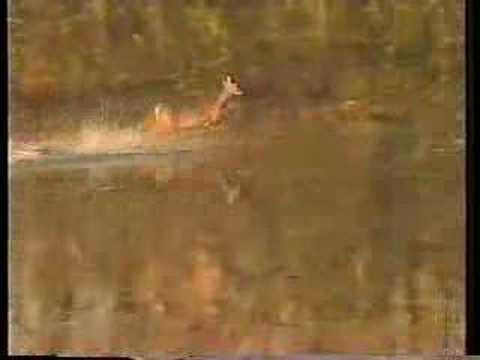 Deer Flip Video