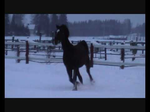 Xxx Mp4 My New Horse Colorado ♥ 3gp Sex