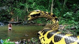 VIDEOBUSTER.de zeigt PIRANHACONDA - Anaconda und Piranha! deutscher Trailer HD zur DVD & Blu-ray