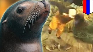 Sea lion attacks Russian fishermen and bites dog after being caught in their net