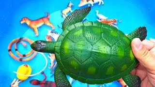 Learn Colors With Wild Animals Blue Pool Toys Colors For Kids Children