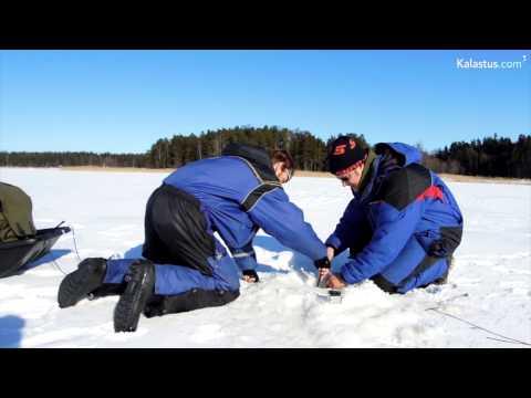 Kuinka ahvenpilkkiin ottanut iso hauki kesytellään jään päälle