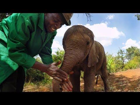 Xxx Mp4 GoPro Orphan Elephants From Kenya 3gp Sex
