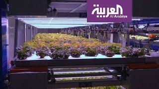 صباح العربية   دبي تفتتح أول مزرعة رأسية في الخليج