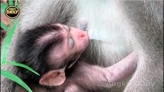 No Power!!New Baby Extremely Tired to get Breastfeeding..Angkor Daily 528