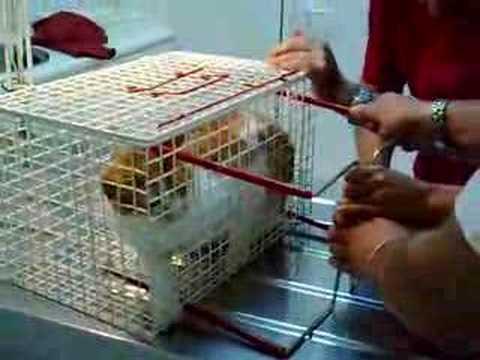 Gato al veterinario una fiera