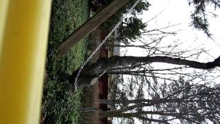 Rip tree out of the ground using only hand tools.  No truck involved! Part 1