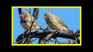 Video: birds observed arguing over parental duties for first time