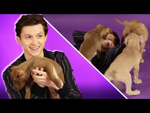Xxx Mp4 Tom Holland Plays With Puppies While Answering Fan Questions 3gp Sex