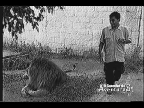 Leão quase engole repórter