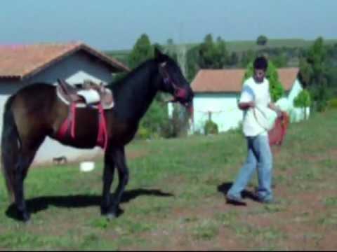 inclivel Doma racional de cavalos