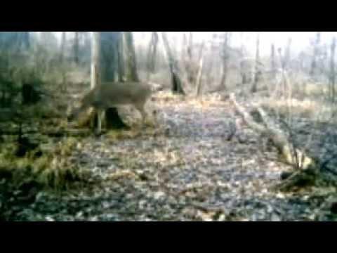 Xxx Mp4 2013 2014 Trail Cam Pics 3gp Sex