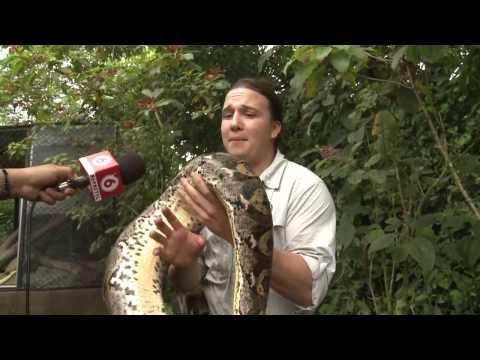 Hombre mordido por una anaconda en Costa Rica