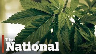 Will pot convictions be pardoned?