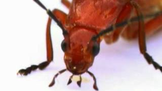 Icky Insects by Silly Bus | Funny | Kids Video | Kids Songs | Kids Music | Educational