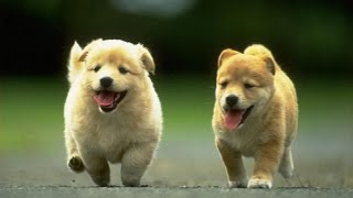 Funny and Cute Dogs Compilation 2017 - Are You Ready To Laugh?