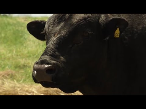ElectroJac 6 Breeding Soundness Exam