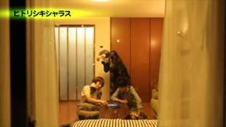 「ヒトリシキシャラス」エグスプロージョン×ひとりでできるもん LIVE TOUR 2013~ピンポンダッシュ~
