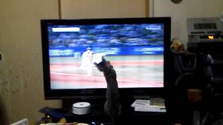 プロ野球観戦をする猫 / Cat watching a baseball game
