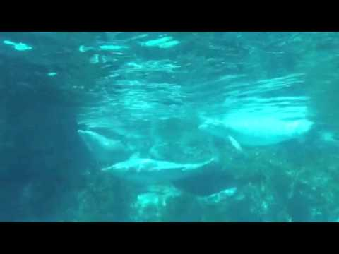 Dolphin Gang Rape at Sea World